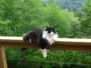 "Groucho perched on the railing three stories up. His story will be in my third book––""Black and White, Yet Colorful All Over."""