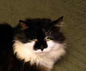 Groucho, my cat.