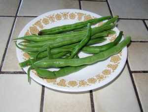 These bush beans are like the typical Blue Lake variety. I get this many every couple of days.