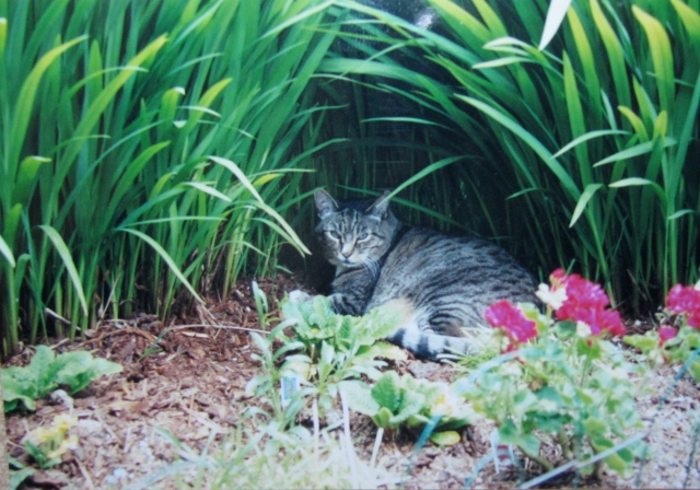 Jetson liked to lie in my flowerbed after spraying all around. Notice his eyes. He's one tough dude.