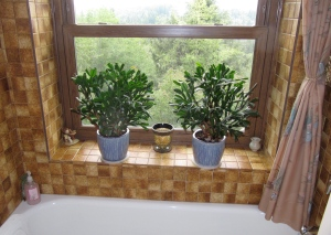 At last, the window is closed and the plants put back. The part involved in raising and lowering was replaced.